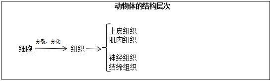 北京教师招聘初中生物《动物体的结构层次》教案-聚师网教育